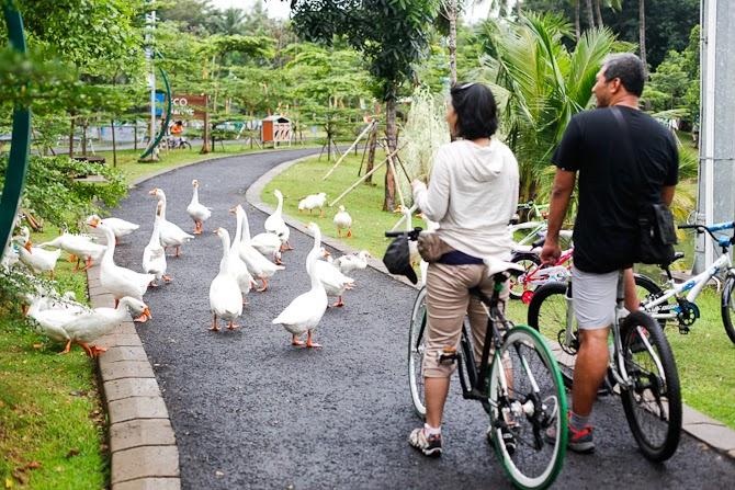 Jalan-jalan ke Allianz Ecopark di Ancol